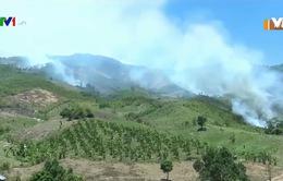 Phòng chống cháy rừng nhờ gắn kết chủ rừng và người dân