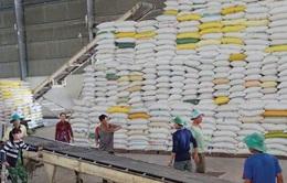 Giá gạo Việt Nam tăng mạnh