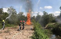 Vườn chim Bạc Liêu cảnh báo cháy cấp cực kỳ nguy hiểm