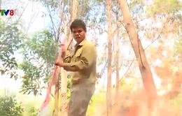Đắk Lắk: Tăng cường công tác phòng chống cháy rừng mùa khô