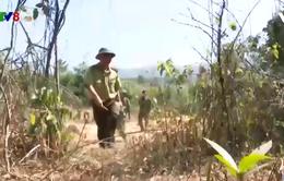 Kon Tum: Tăng cường bảo vệ rừng khu vực biên giới
