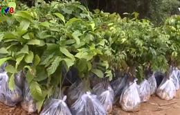 Quảng Trị phát triển rừng tự nhiên