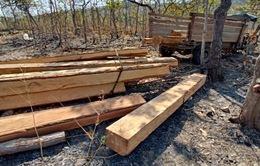 Phát hiện hơn 7,7 m3 gỗ khai thác trái phép