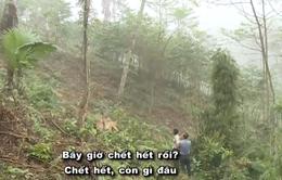 """Hô biến rừng tự nhiên thành """"vàng"""" chảy vào túi riêng: Em sai rồi, cho em được... trồng lại """"rừng""""!"""