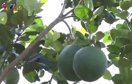Quảng Ngãi: Tái cơ cấu nông nghiệp thay đổi đời sống người dân miền núi