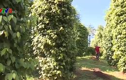 Đắk Nông: Phát triển vùng nguyên liệu gắn với chế biến nông sản