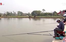 Đà Nẵng phát triển mô hình nuôi cá phục vụ sinh thái