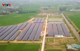 Hà Tĩnh:  Doanh nghiệp xây dựng trang trại trái phép