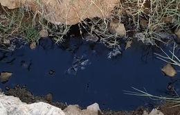 Nước đầm chứa khu nhà máy chế biến hải sản ở Bà Rịa - Vũng Tàu đổi màu, bốc mùi hôi thối