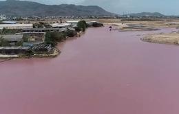 Truy tìm nguyên nhân đầm nước đổi màu tím bốc mùi hôi thối nồng nặc tại Bà Rịa – Vũng Tàu