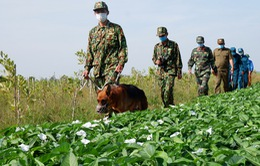Tiếp tục tăng cường lực lượng phòng chống dịch COVID-19 cho tuyến biên giới phía Tây Nam