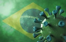 Biến thể SARS-CoV-2 tại Brazil có thể làm mất khả năng miễn dịch