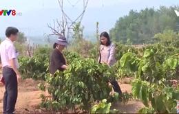 Kon Tum: Tiếp tục hỗ trợ hộ nghèo vay vốn tín dụng chính sách