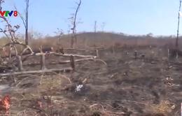 Đắk Lắk hàng chục héc ta rừng bị tàn phá
