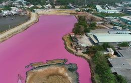 Đầm nước đổi màu tím đậm đặc, người nuôi cá đứng ngồi không yên