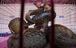 WHO kêu gọi chấm dứt buôn bán động vật hoang dã ở chợ dân sinh