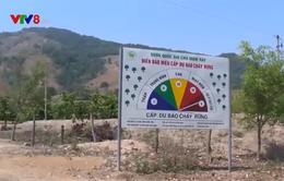 Kon Tum: Cảnh báo cháy rừng cấp cực kỳ nguy hiểm