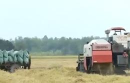 Ổn định cuộc sống người dân vùng nắng hạn nhờ được mùa lúa