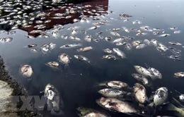 Khoảng 30 tấn cá chết bất thường dọc bờ biển Thanh Hóa