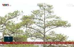 Cho thuê môi trường rừng để làm du lịch sinh thái