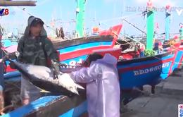 Bình Định: Xử lý nghiêm tàu cá khai thác hải sản trái phép