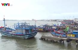 Quảng Nam khẩn trương hoàn thành cảng cá Tam Quang