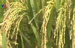 Gia Lai: Hướng đi mới cho ngành nông nghiệp