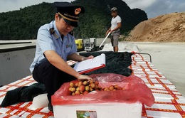 Ưu tiên xuất khẩu nông sản qua cửa khẩu Lạng Sơn