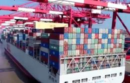 Nhà nhập khẩu hàng đầu nước Mỹ sử dụng tàu riêng để vận chuyển hàng
