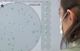 Mỹ nỗ lực truy tìm nguồn gốc virus gây bệnh COVID-19