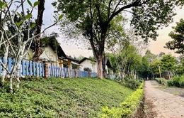 Vì sao dự án Felicia City Bình Phước tạo sức hút trong mùa dịch?