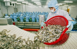 Vượt khó 5 tháng đầu năm, xuất khẩu thủy sản tăng hơn 13%