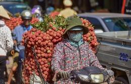 5.000 tấn vải thiều Bắc Giang được tiêu thụ mỗi ngày