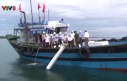 Thừa Thiên - Huế: Tái tạo nguồn lợi thủy sản trên biển