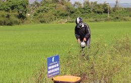 Cải thiện môi trường từ mô hình thu gom rác thải trên đồng ruộng