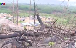 Kon Tum chỉ đạo làm rõ vụ 17 ha rừng bị lấn chiếm ở Ia H'Drai