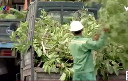 Nghịch lý cắt tỉa cây xanh giữa mùa hè ở Đà Nẵng
