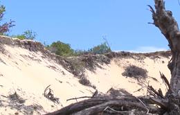 Phát hiện và Điều tra: Thừa Thiên - Huế: Buông lỏng quản lý tài nguyên cát ven biển