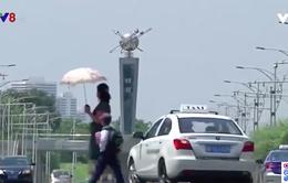 Bán đảo Triều Tiên hứng chịu nắng nóng bất thường trong suốt tháng 7