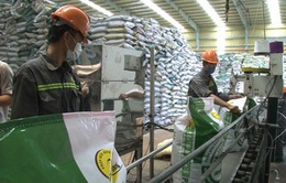 Đề nghị thanh tra toàn diện hoạt động sản xuất, kinh doanh phân bón
