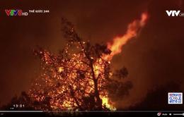 Cháy rừng nghiêm trọng tại nhiều nơi trên thế giới