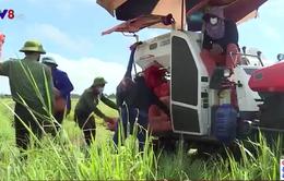 Hà Tĩnh chung tay giúp dân vùng dịch thu hoạch lúa Hè-Thu