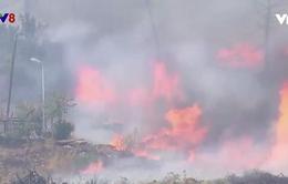 Hàng chục vụ cháy rừng nhấn chìm miền Nam Thổ Nhĩ Kỳ trong biển lửa