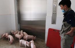 """""""Khách sạn lợn"""" tại Trung Quốc"""