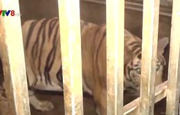 Những bất cập trong xử lý các vụ án liên quan đến động vật hoang dã