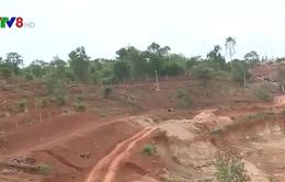 Đắk Lắk: Đề nghị điều tra vụ Giám đốc ngân hàng hủy hoại đất