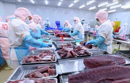 Xuất khẩu cá ngừ đối mặt với thách thức