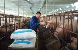 Đề xuất giảm thuế nhập khẩu ngô, lúa mì