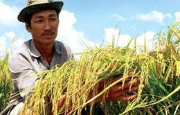 THTT: Lễ trao giải cuộc thi viết về Nông nghiệp (20h05, 11/3, VTV1)