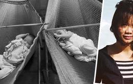 Phim tài liệu Việt Nam và những con cá trong cái âu thủy tinh
